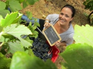 pacelle de vigne